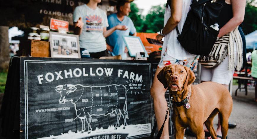Dog at Foxhollow