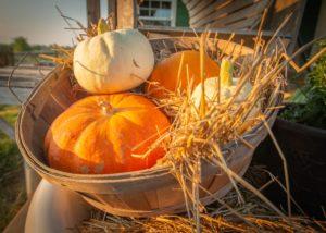 Pumpkin Basket