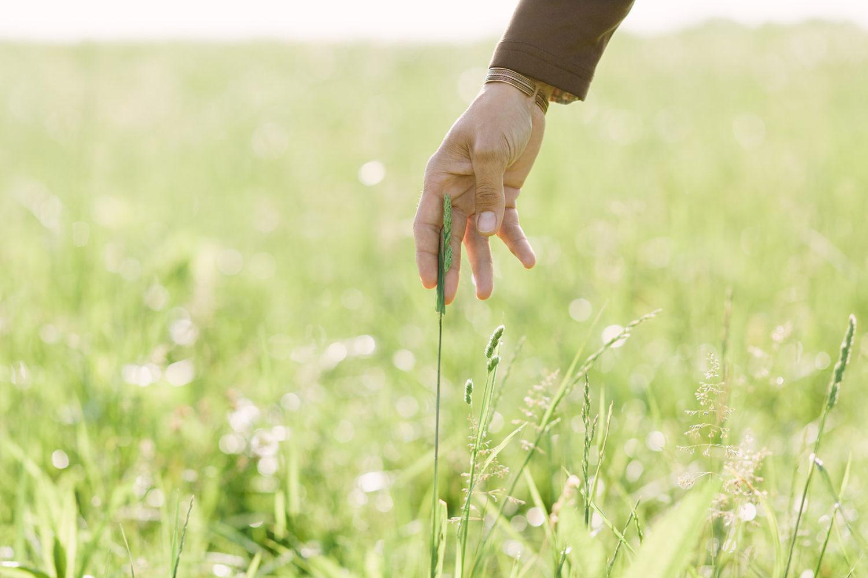 Derek Hand Touch Grass